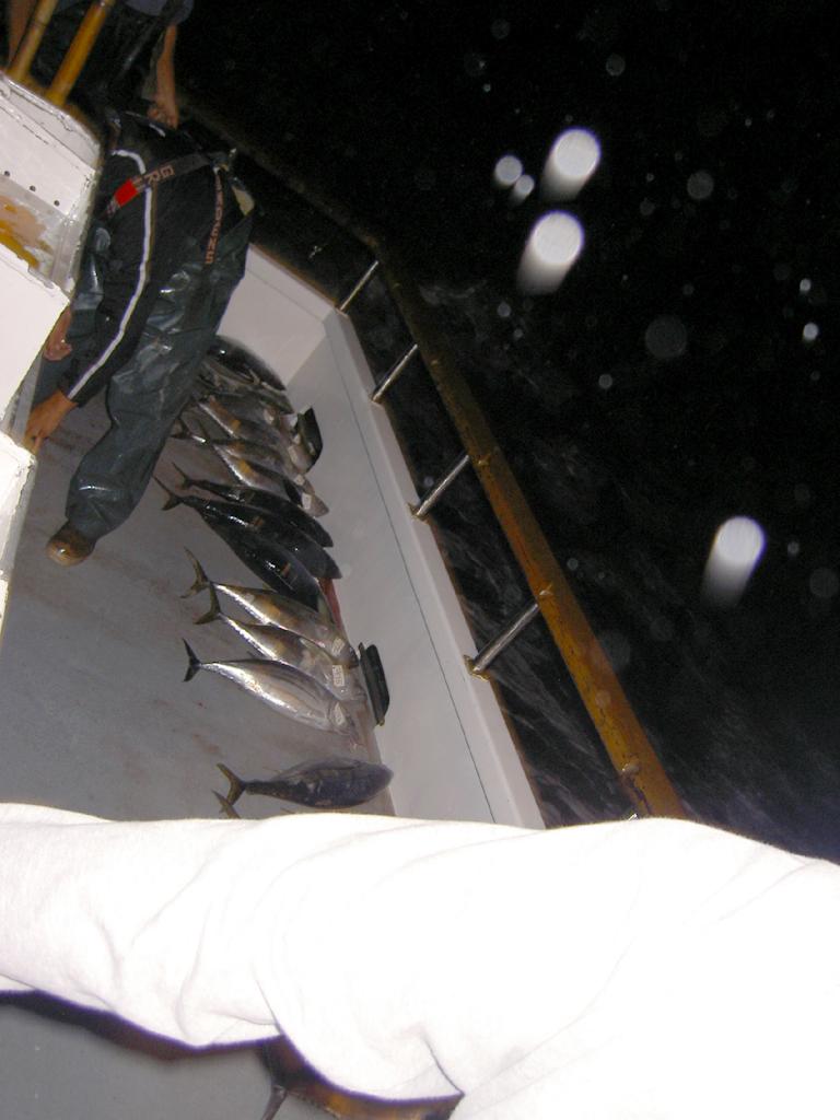 第二回SGNマグロ釣りチャーター 2