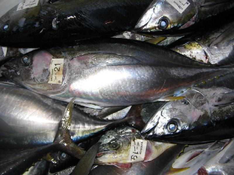 第二回SGNマグロ釣りチャーター 4