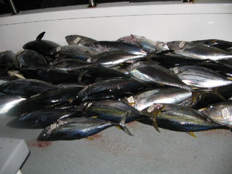 第二回SGNマグロ釣りチャーター 8