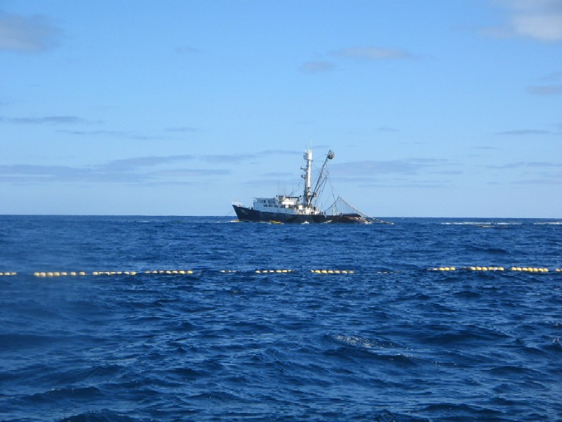 第二回SGNマグロ釣りチャーター 40