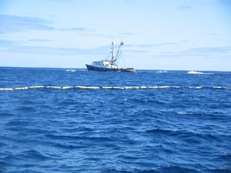 第二回SGNマグロ釣りチャーター 41
