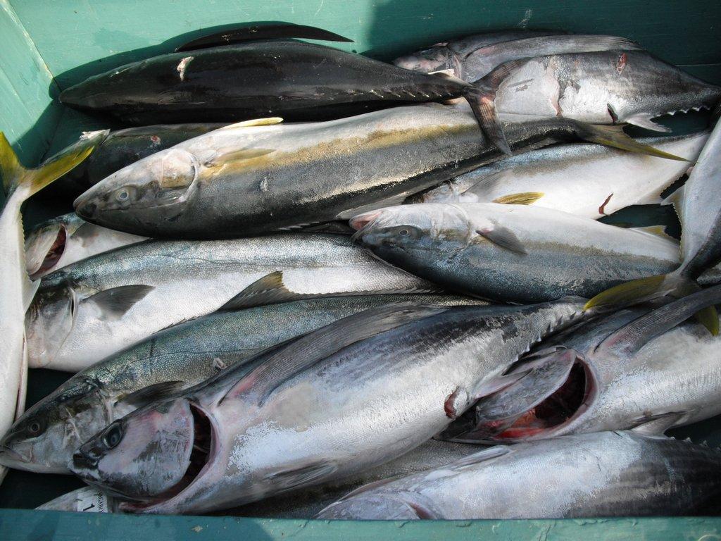 SGN第8回マグロ釣りチャーター 136