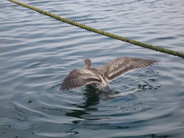 第7回 SGN釣り大会(2009年9月) 20
